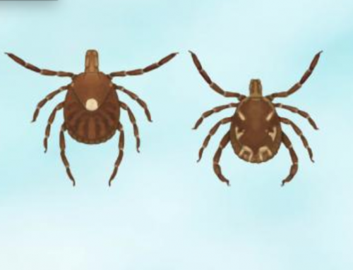 Project Lone Star: Help Find the Lone Star Tick in Vermont
