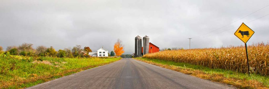 Road through a VT Cornfield